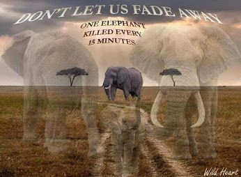 Animal Rights - Quotes & Thoughts - Community - Google+