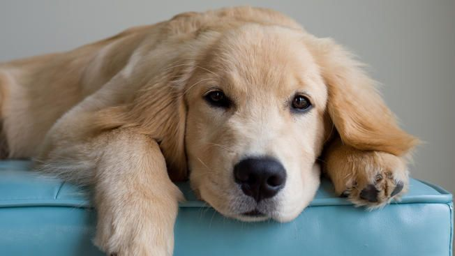 A Dog Owner S Greatest Fear Study Aims To Uncover Why Cancer