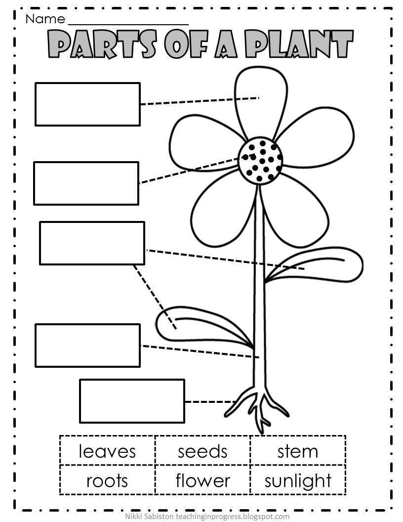 Teaching In Progress Is Written By Veteran Teacher And Curriculum Designer Nikki Sabiston She Shares Preschool Science Kindergarten Science Plants Worksheets [ 1056 x 816 Pixel ]