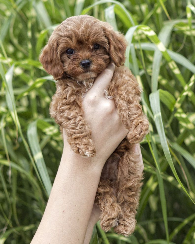 if i ever got a pup it would be this one Cute little