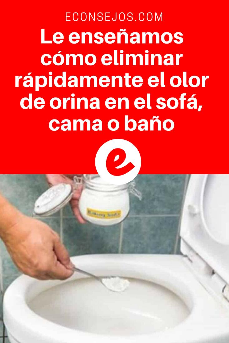 Le Ense Amos C Mo Eliminar R Pidamente El Olor De Orina En El Sof  ~ Limpiar Sofa De Tela Trucos Caseros