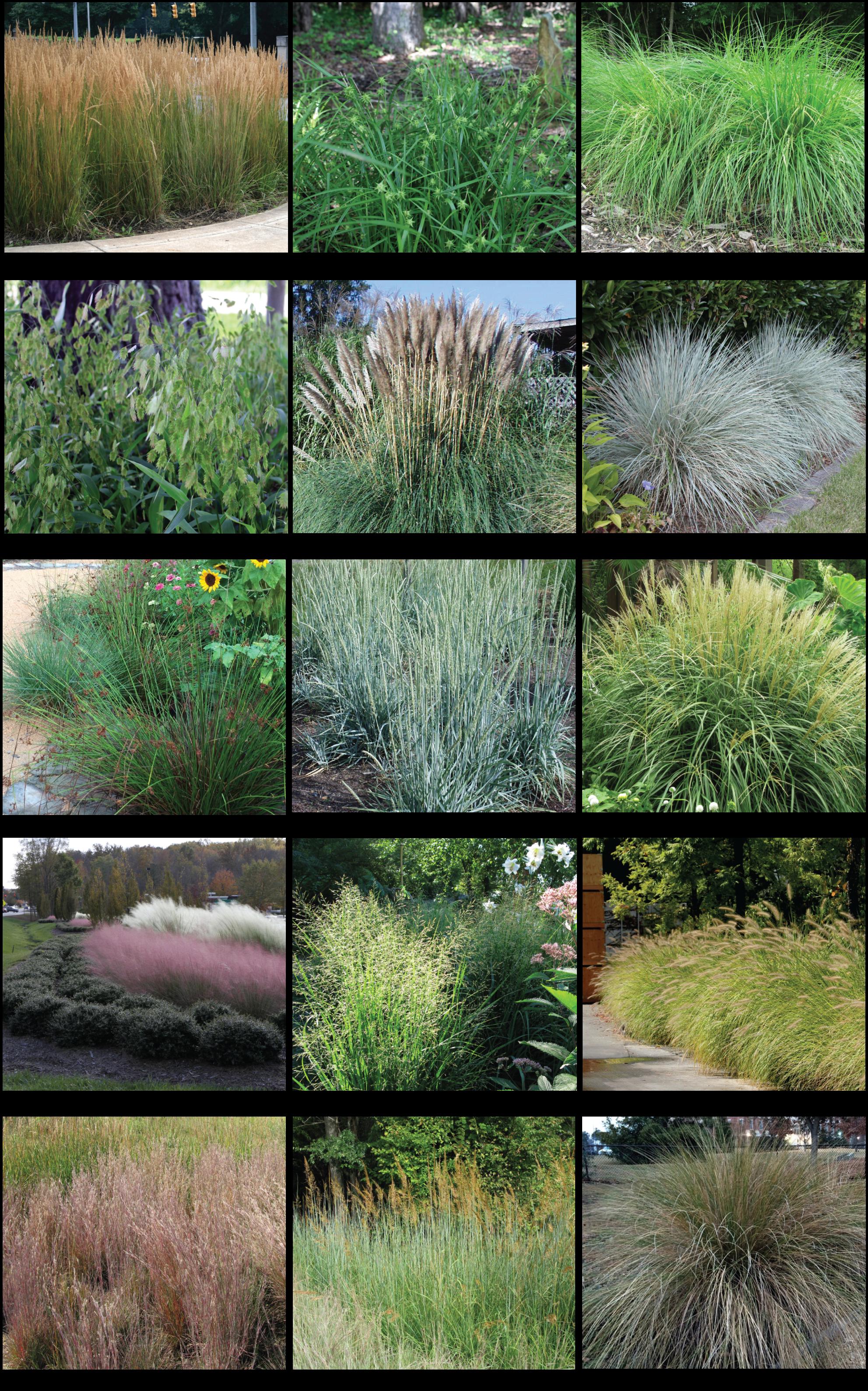Salt Tolerant Grasses Grasses Landscaping Plants Water Garden