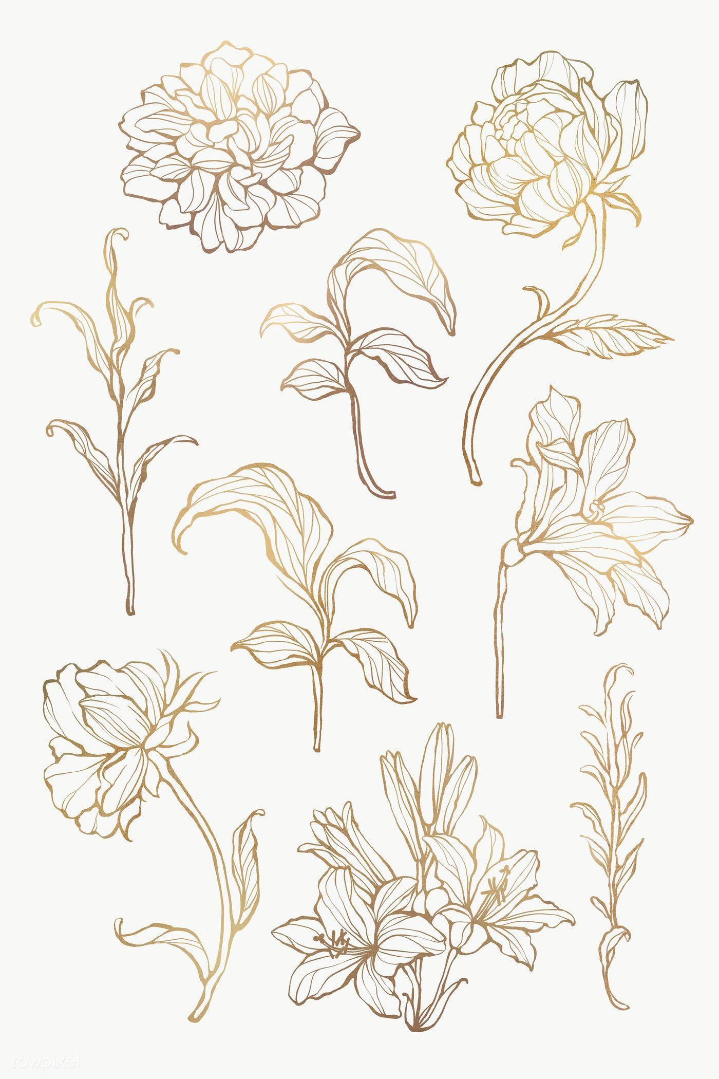Gold Floral Outline Set Transparent Png Premium Image By Rawpixel Com Nunny Flower Outline Leaf Outline Outline Art