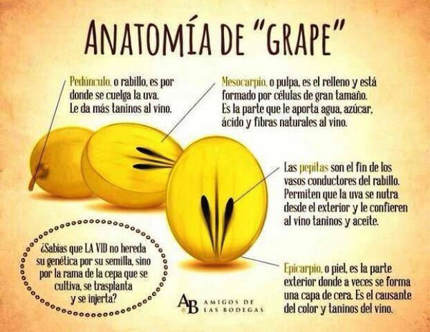 """Anatomía de """" Grape """""""