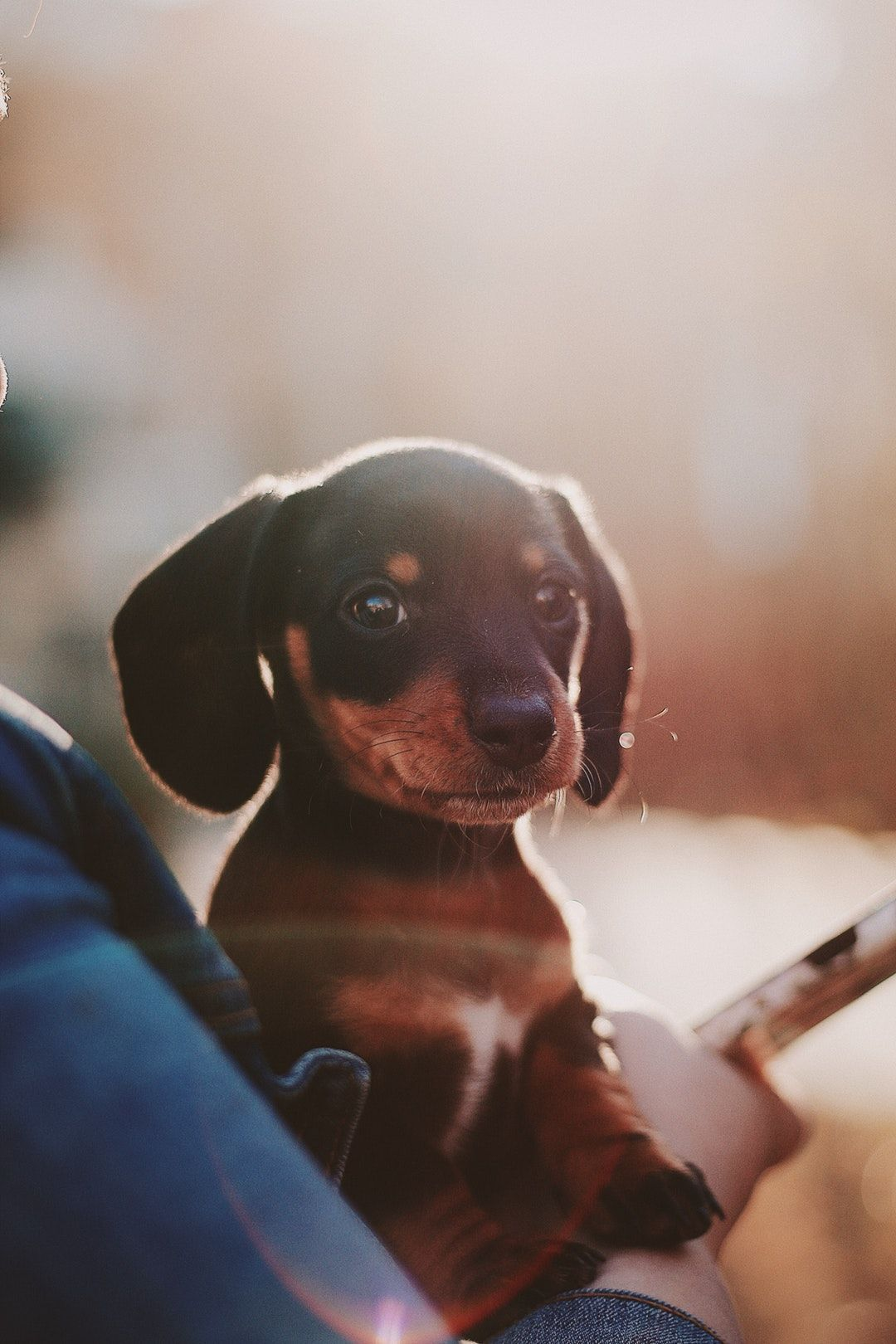 Download This Free Hd Photo Of Dog Puppy Pet And Portrait In