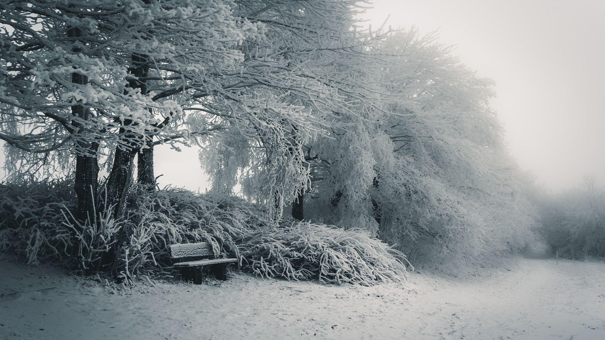 Delicate winter