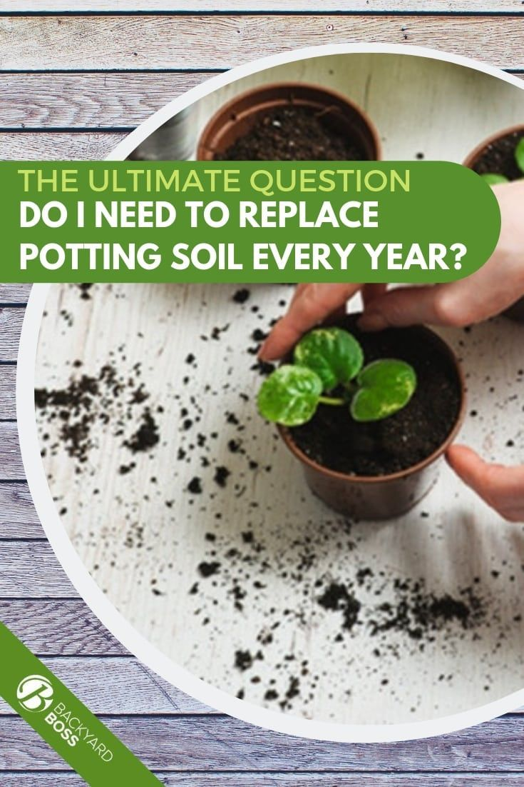 Do i need to replace potting soil every year potting