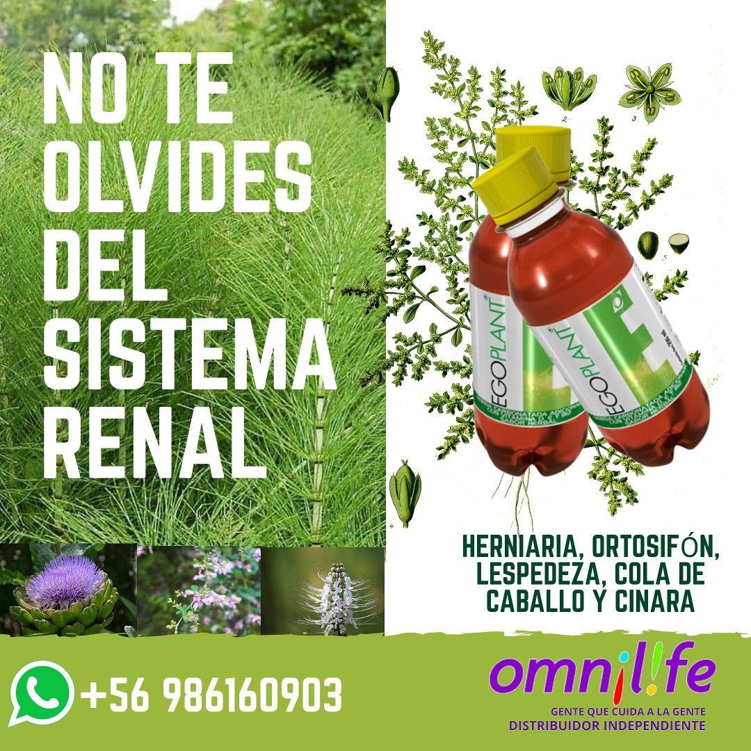 Ego Plant Omnilife Limpieza De Intestino Productos Para La Salud
