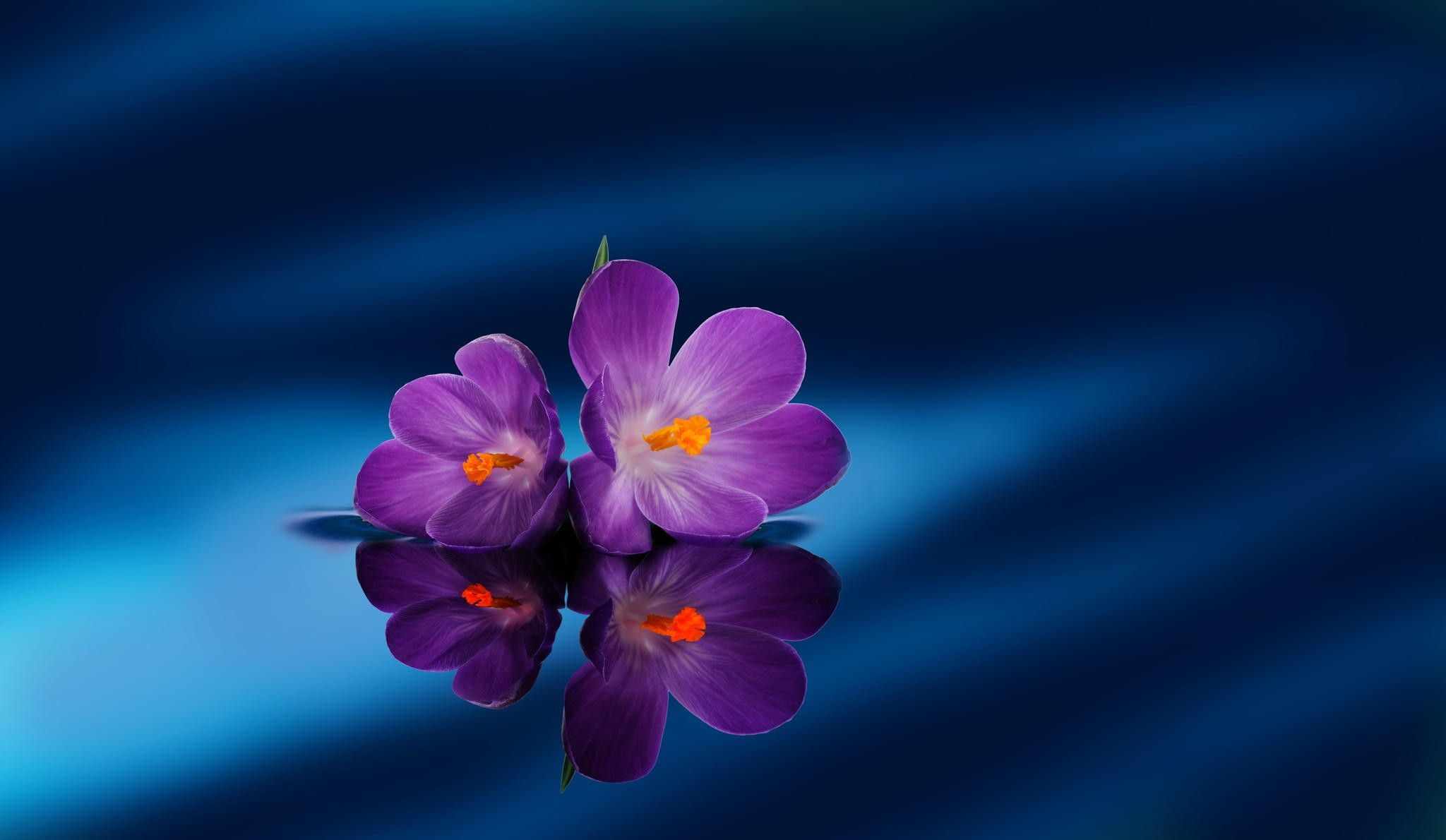 Flowers Purple Flowers Photography Blue Best Wallpapers For High Resolution Hd 16 9 Wqhd Qwxga 1080p Purple Flower Pictures Flowers Photography Purple Flowers