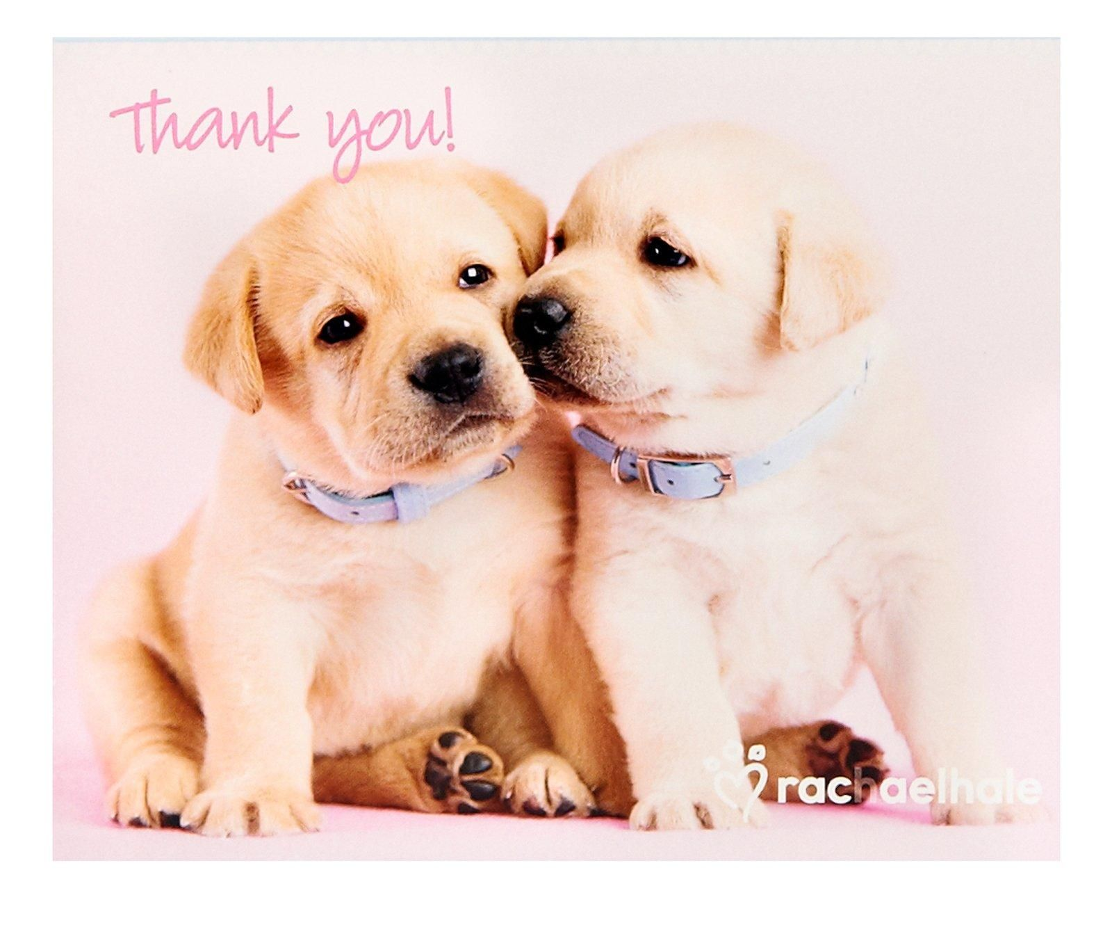 Rachaelhale Glamour Dogs Thank You Notes 8 Glamour Dogs Puppies Lab Puppies