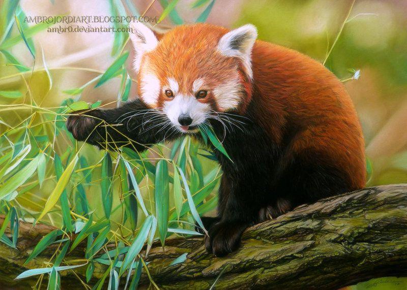Pin by Tanya on Art Red panda, Panda gif, Animals beautiful