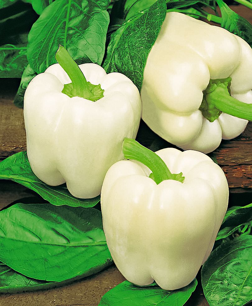 White peppers