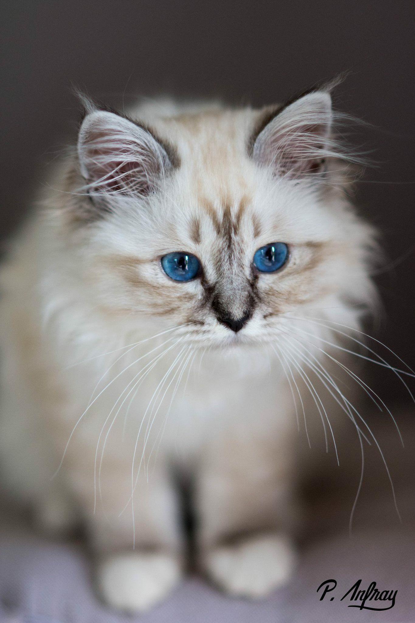 Love Cat Beautiful Kittens Kittens Cutest Kittens And Puppies