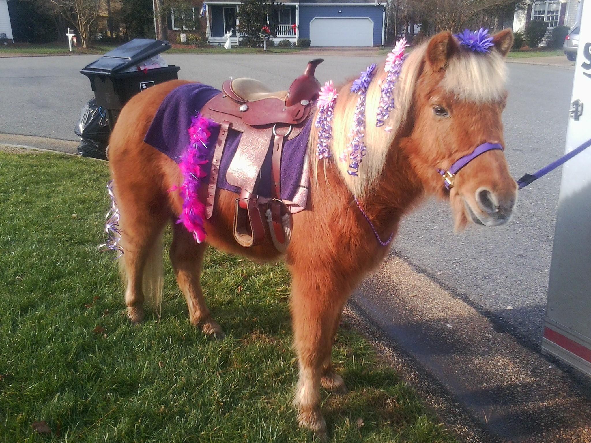 Austin Pony Parties Pony Party Unicorn Themed Birthday Party Pony