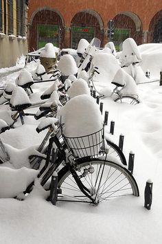 bicycles hibernating
