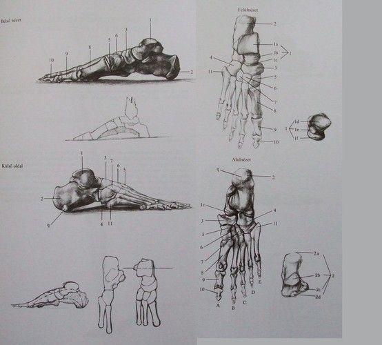 Jenő Barcsay - Művészeti anatómia (~Artistic anatomy) | grafik ...