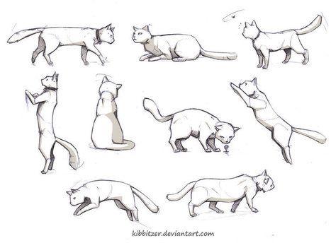 Cat reference by Kibbitzer on deviantART   Drawing ...
