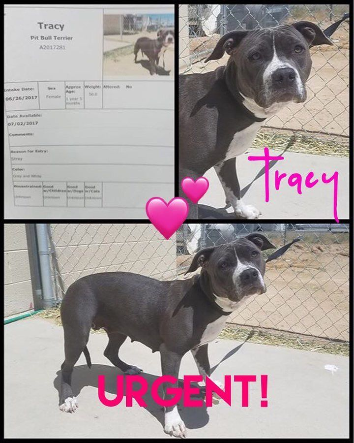 Gefallt 93 Mal 36 Kommentare California City Animal Shelter Californiacityanimalshelter Auf Instagram Trac Animal Shelter Cute Animal Photos Animals