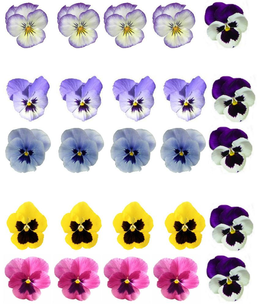 25 Beautiful Mixed Colour Pansy Flower Edible Wafer Rice Paper Cupcake Toppers Pansies Flowers Edible Cake Toppers Edible Printing