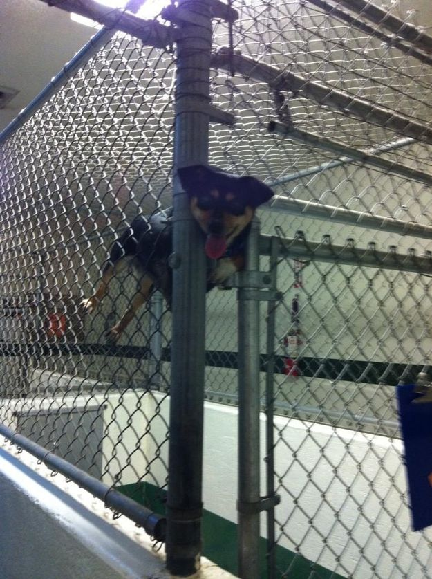 This dog who decided he'd engineer the perfect escape.