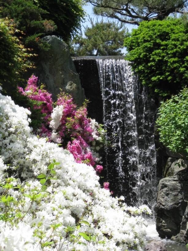 Missouri Botanical Garden If I Can Get Married By The Waterfall Then This  Is My Venue