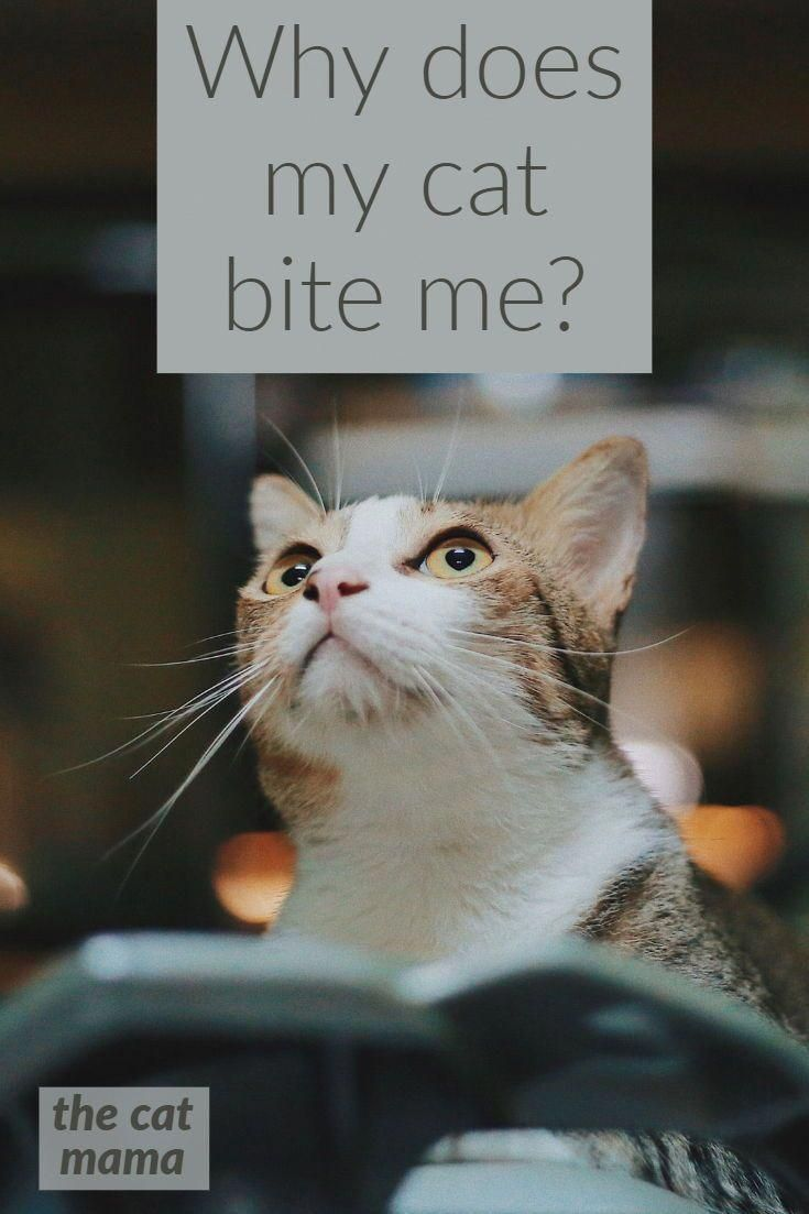 Is it love? Or aggression?How do I make my cat stop?
