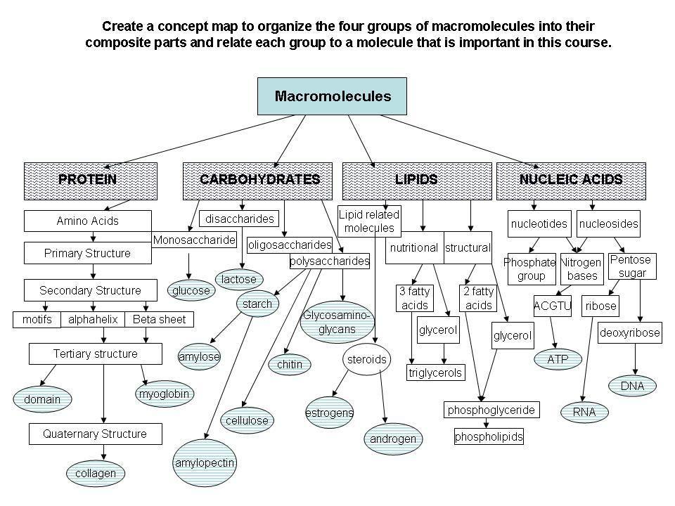 Lipid Concept Map Biology