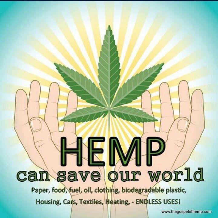 Pin By Brandy Michelle On Cannabis Love Cannabis Hemp Medical