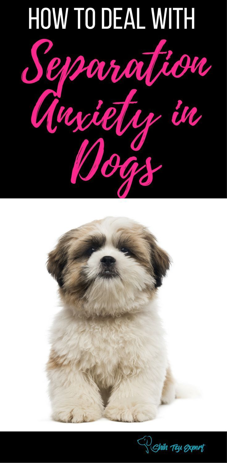 Separation Anxiety in Dogs : Here is a guide to help you deal with ...   Toys For Dogs With Separation Anxiety