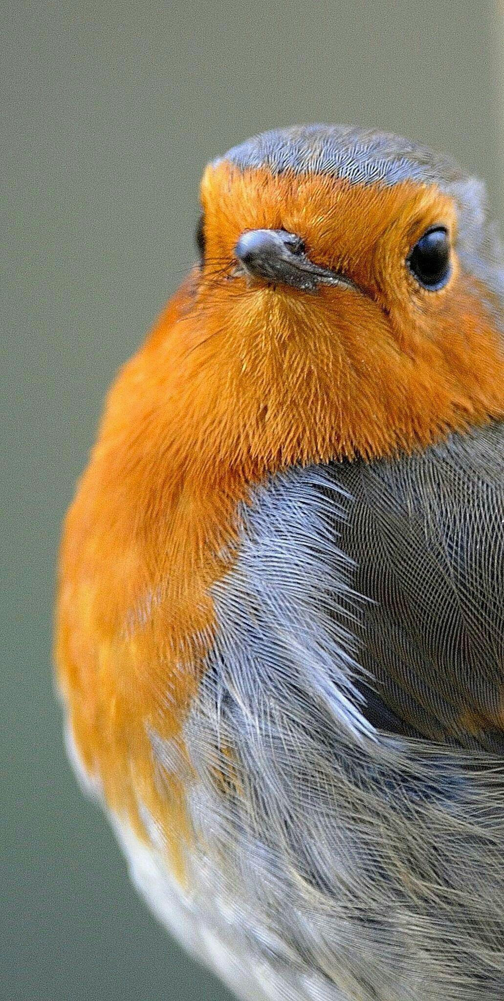 pinlife horizon on birds  birds robin bird birds