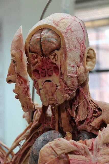 Pin By Mariah White On Random Pinterest Anatomy Human Body And