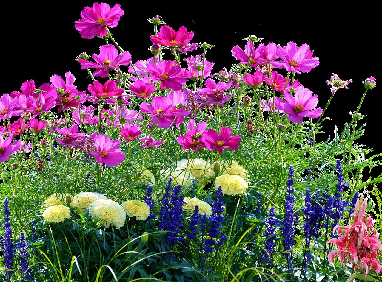 картинка полевые цветы на прозрачном фоне именно
