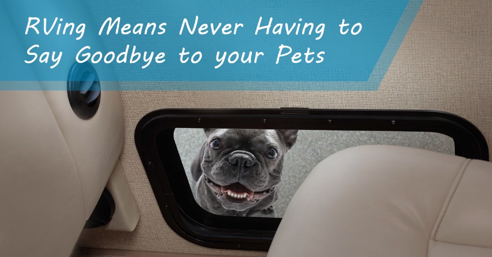 Pin On Rving With Pets