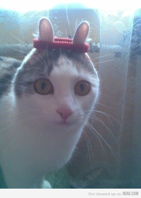 I do not condone any form of cat abuse but this is funny.