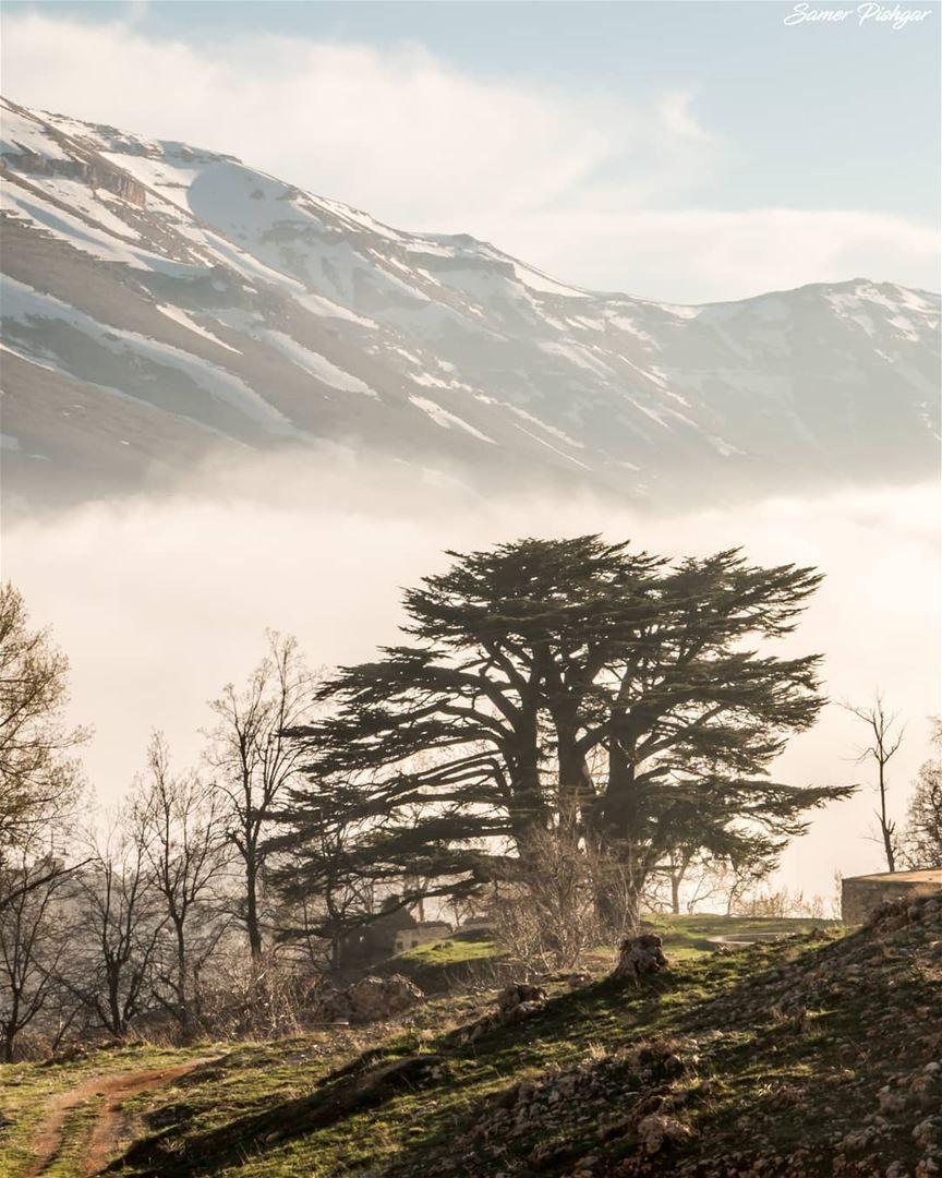 Lebanon The Cedars Bcharre Lebanon Lebanese Foggy Lebanon In A Picture Places To Visit Nature Beautiful Nature