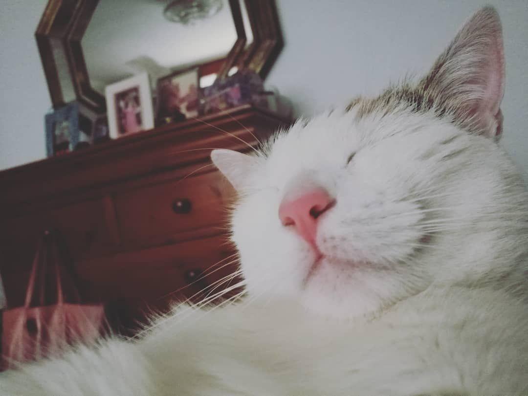 Sigo soñando gatos mundogatuno miau soft instagramiau