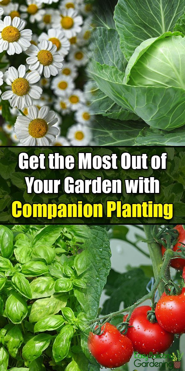 Get the Most Out of Your Garden with Companion Planting