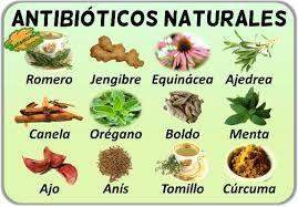 Resultado de imagen de plantas medicinales dibujos antiguos ...