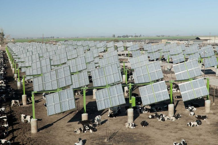First Cattle Feedlot Solar Field Science And Nature