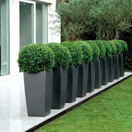 un alignement de hauts pots souligne une terrasse, un porche ... - Comment Amenager Son Jardin Devant La Maison