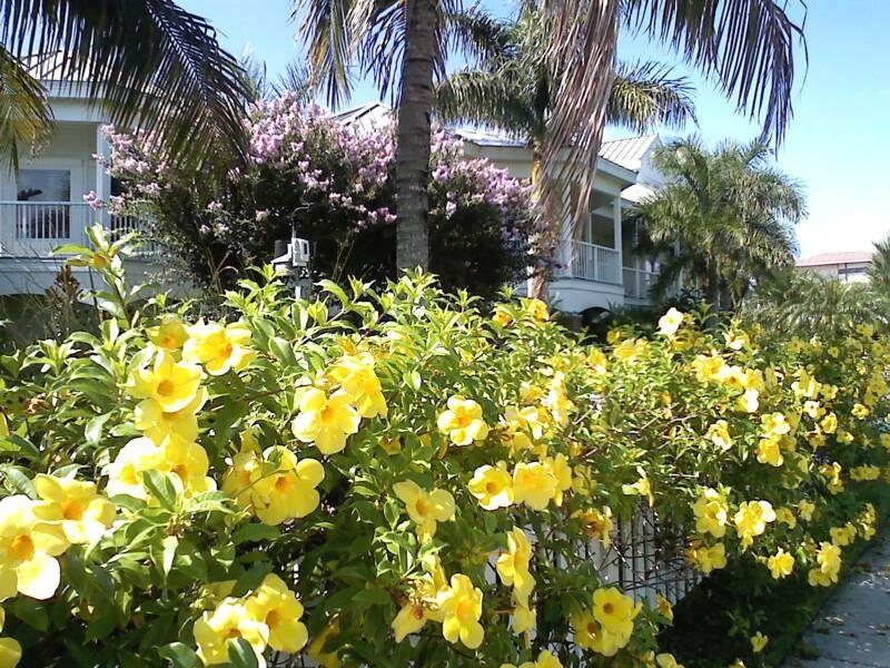 resultado de imagen para planta de flor amarilla