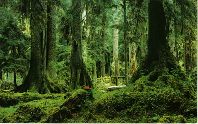 Olympic Peninsula, Rain forest and also where I am going...always...