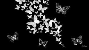 Black And White Butterflies Wallpaper