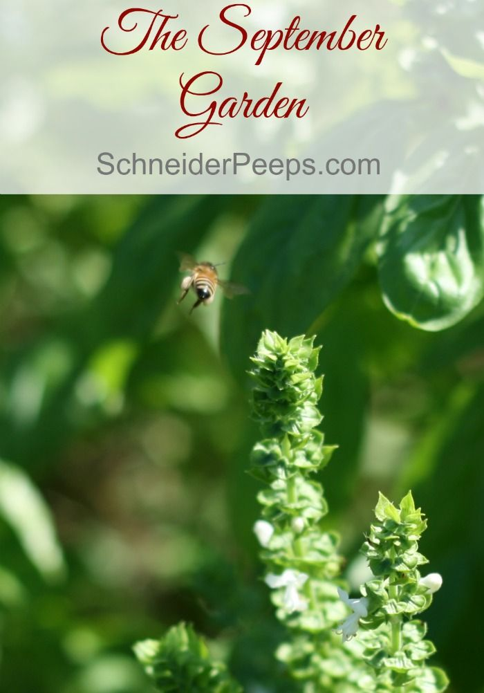 The September Garden | September, Gardens and Garden inspiration