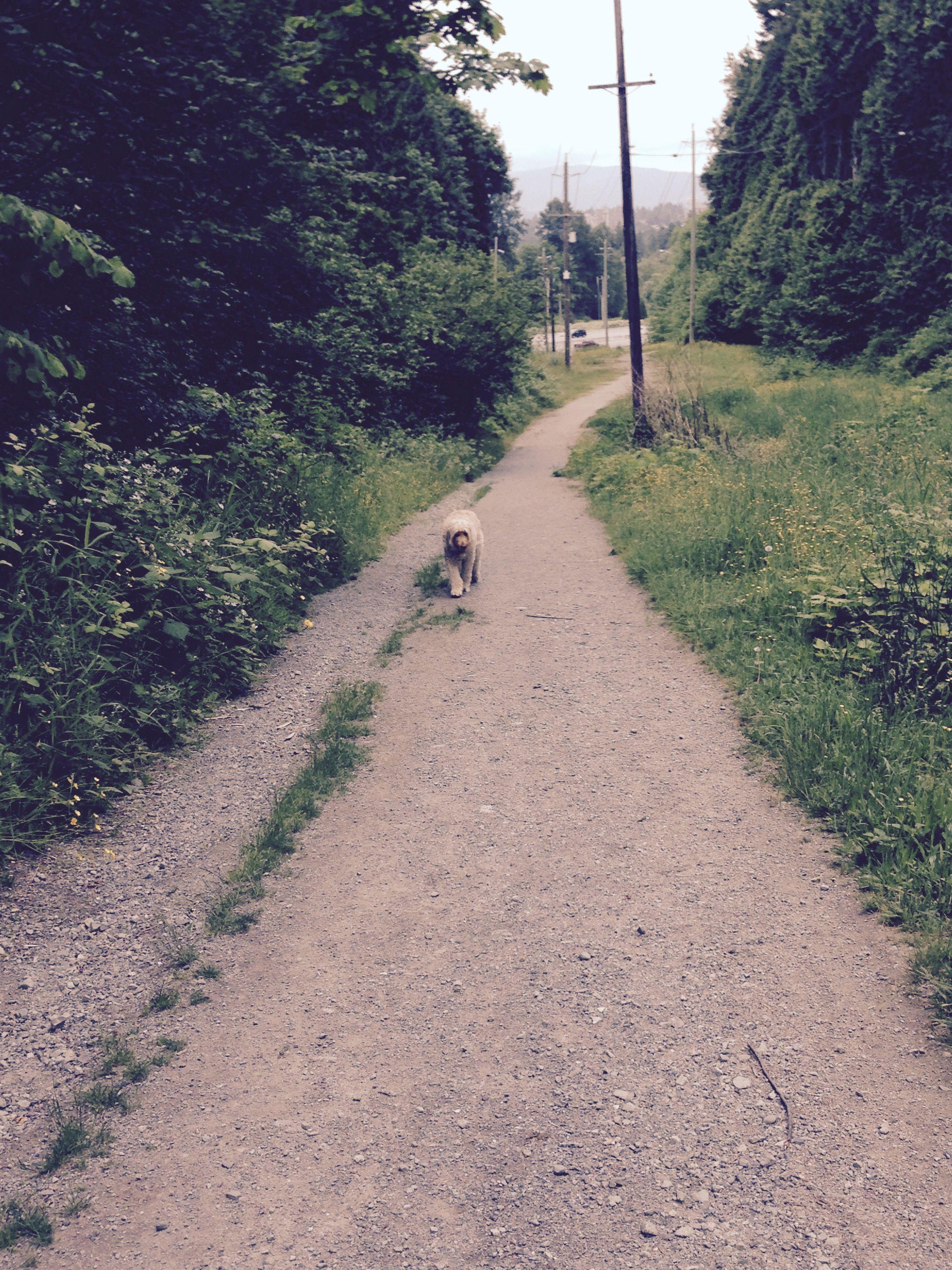 Off leash area- under power lines, Robert Burnaby Park
