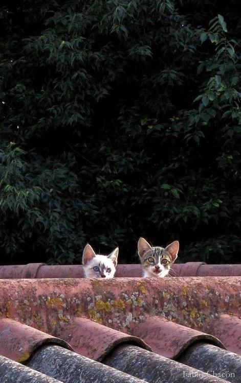 Pin Von Anna Tru Auf Adorable Animals Katzen Katzenbabys Baby Katzen