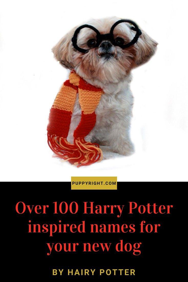 Harry Potter Dog names Over 100 Harry Potter inspired names for your new dogOver 100 Harry Potter inspired names for your new dog