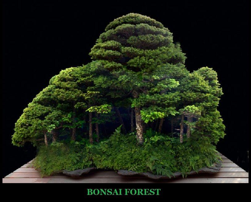 "Bonsai Forest --- Inspiration Living Board Game - Make ""Landmasses"" based on different Bioregions on Earth?"