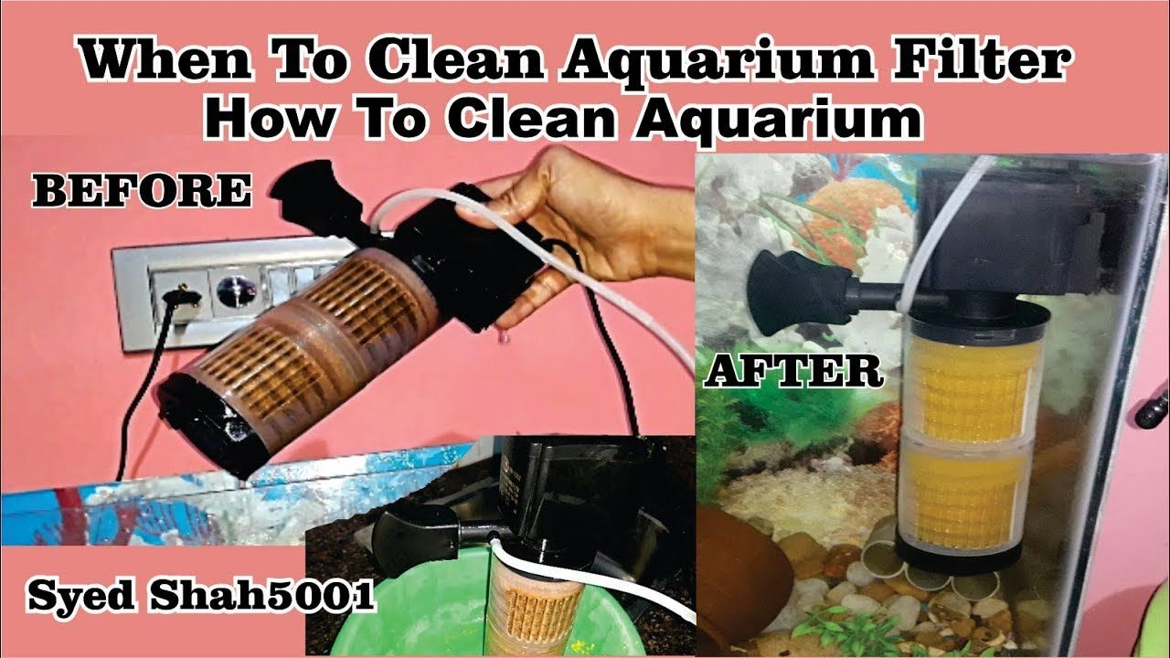 How To Diy Easy Fish Tank Filter Cleaning How To Keep Your Aquariu Fish Tank Aquarium Aquarium Fish Tank