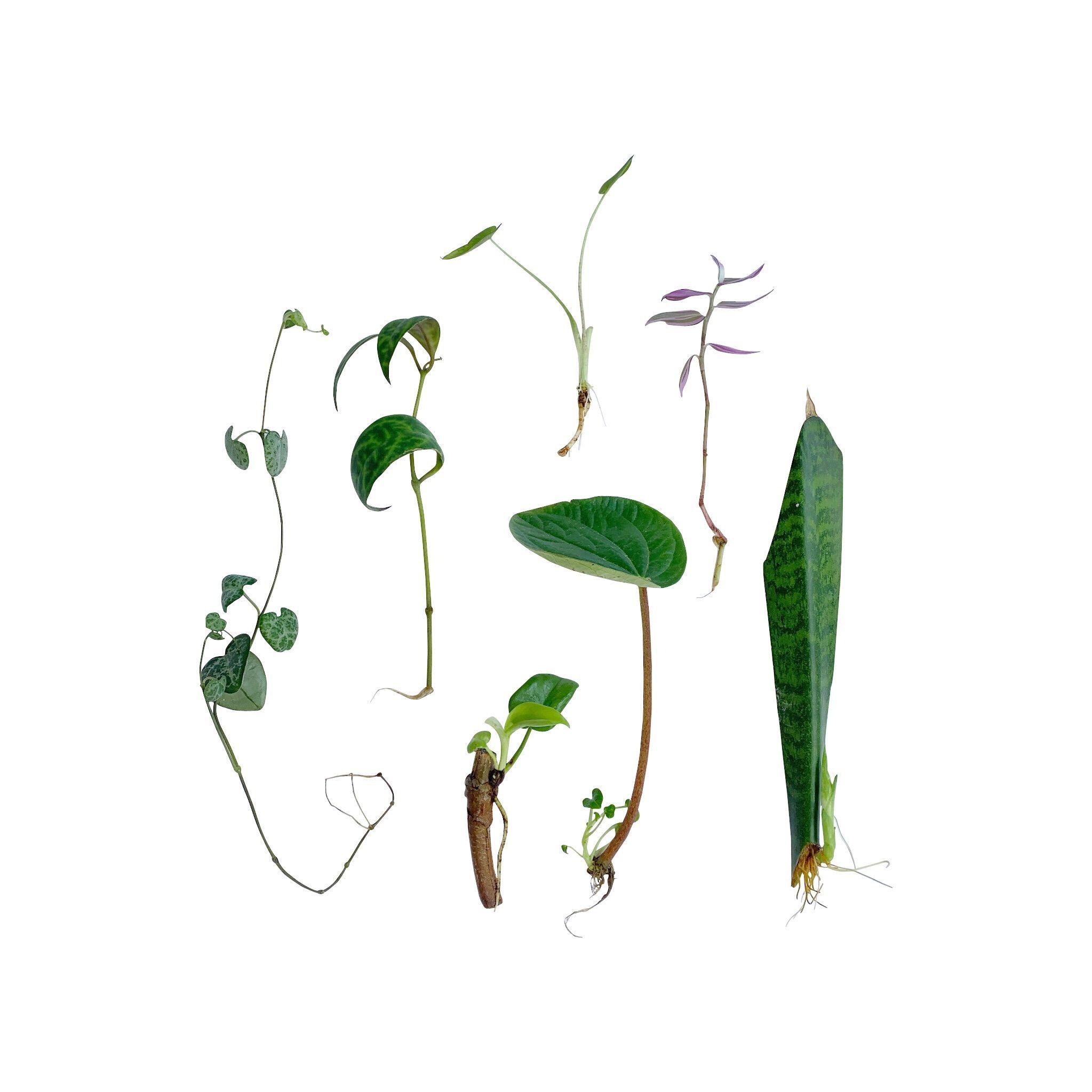 A Summer Plant & Cutting Swap in LA's Art District #DTLA #losangeles #LAworkshop #plantswap #swap #propagate #currentlypropagating #propagation #propagating #Planttrade #cuttings #tradeplants #houseplantcommunity #plantenabler #talkplantytome #plantfriends #plantcommunity #indoorplants  #houseplants #houseplantplantclub #plantcommunity #plantparenthood #planthoarder #flauntyourleaves  #coolplantkids #plantsmakepeoplehappy #urbanjunglebloggers #apartmenttherapy #iplanteven